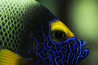 Aquarium im Zooh Zürich