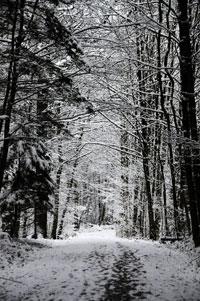 Winterträume in Zürich